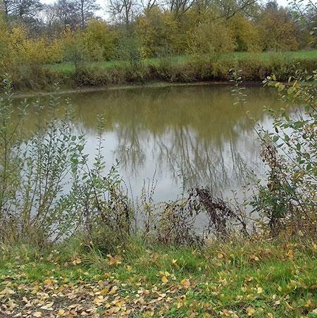 Les étangs d'Oisy